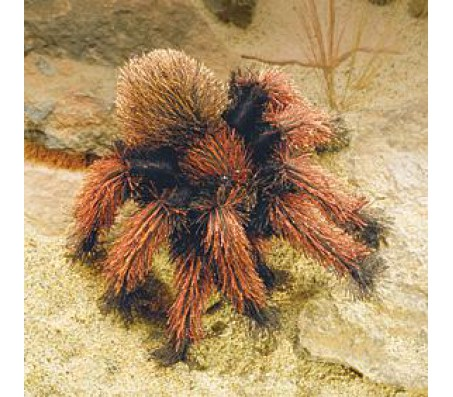 Маленький тарантул, 23 смМарионетки (перчаточные куклы)